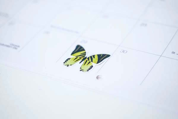Yellow striped butterfly sticker on white calendar box