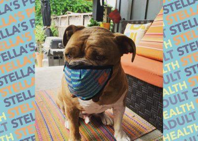 Photo of cute dog wearing mask, blue patterned background